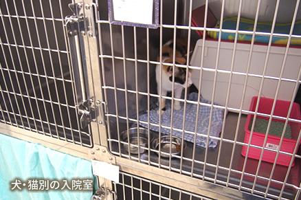 犬・猫別の入院室
