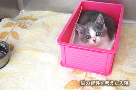 猫の習性を考えた入院