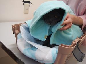 タオルの中に隠れられる状態だと安心するこがいます