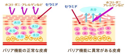 皮膚バリア図